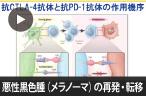 悪性黒色腫(メラノーマ)の再発・転移の治療方針